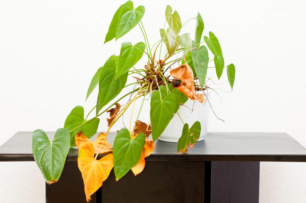 How to have happy houseplants