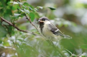 Turn Your Garden into a Certified Wildlife Habitat